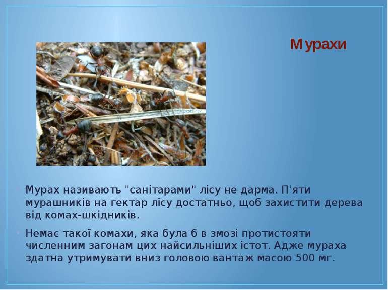 """Мурахи Мурах називають """"санітарами"""" лісу не дарма. П'яти мурашників на гектар..."""