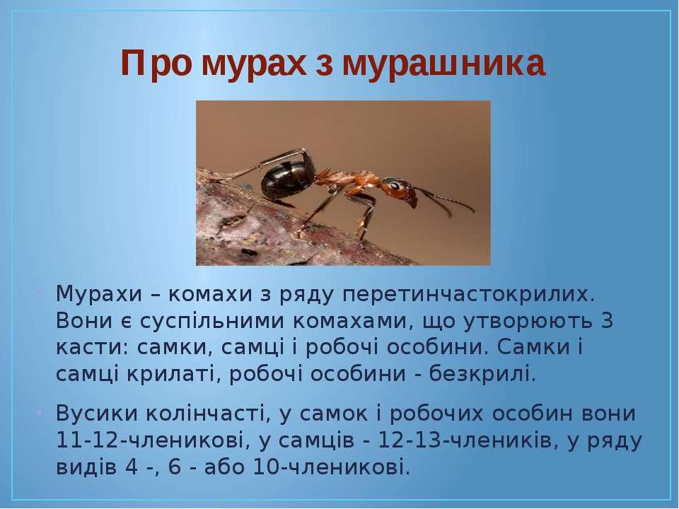 Мурахи – комахи з ряду перетинчастокрилих. Вони є суспільними комахами, що ут...