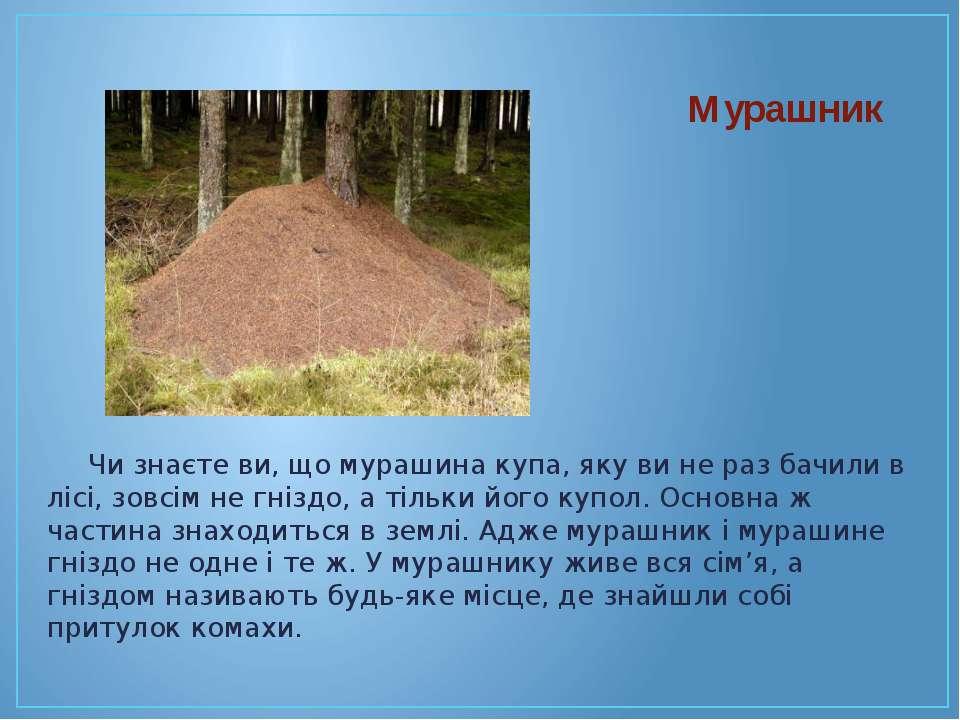 Чи знаєте ви, що мурашина купа, яку ви не раз бачили в лісі, зовсім не гніздо...