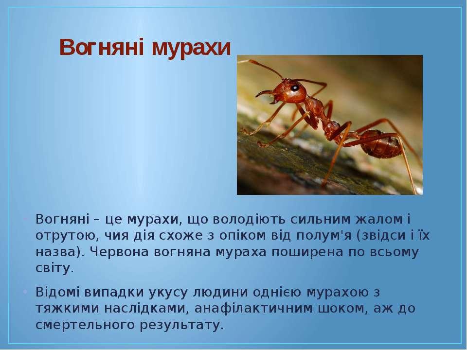Вогняні мурахи Вогняні – це мурахи, що володіють сильним жалом і отрутою, чия...