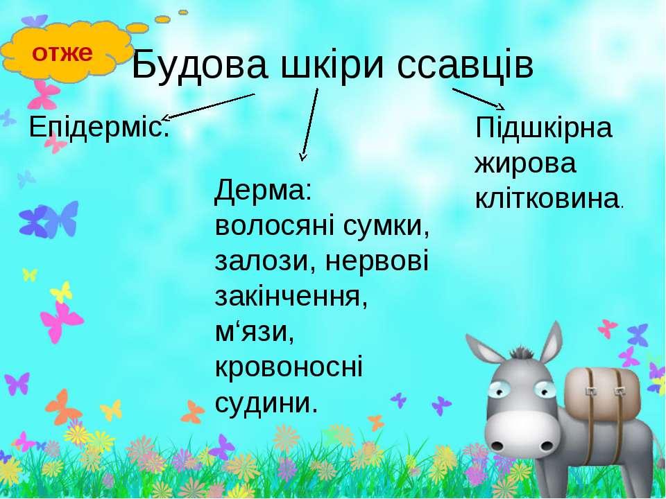 Епідерміс. Епідерміс.