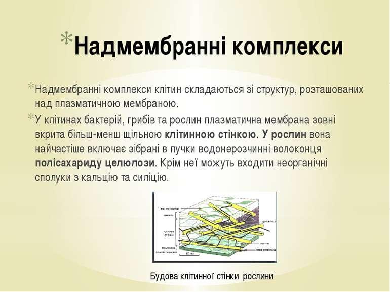 Надмембранні комплекси Надмембранні комплекси клітин складаються зі структур,...