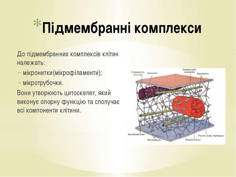 До підмембранних комплексів клітин належать: мікронитки(мікрофіламенти); мікр...