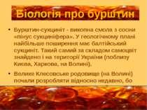 Бурштин-сукциніт - викопна смола з сосни «пінус сукциніфера». У геологічному ...