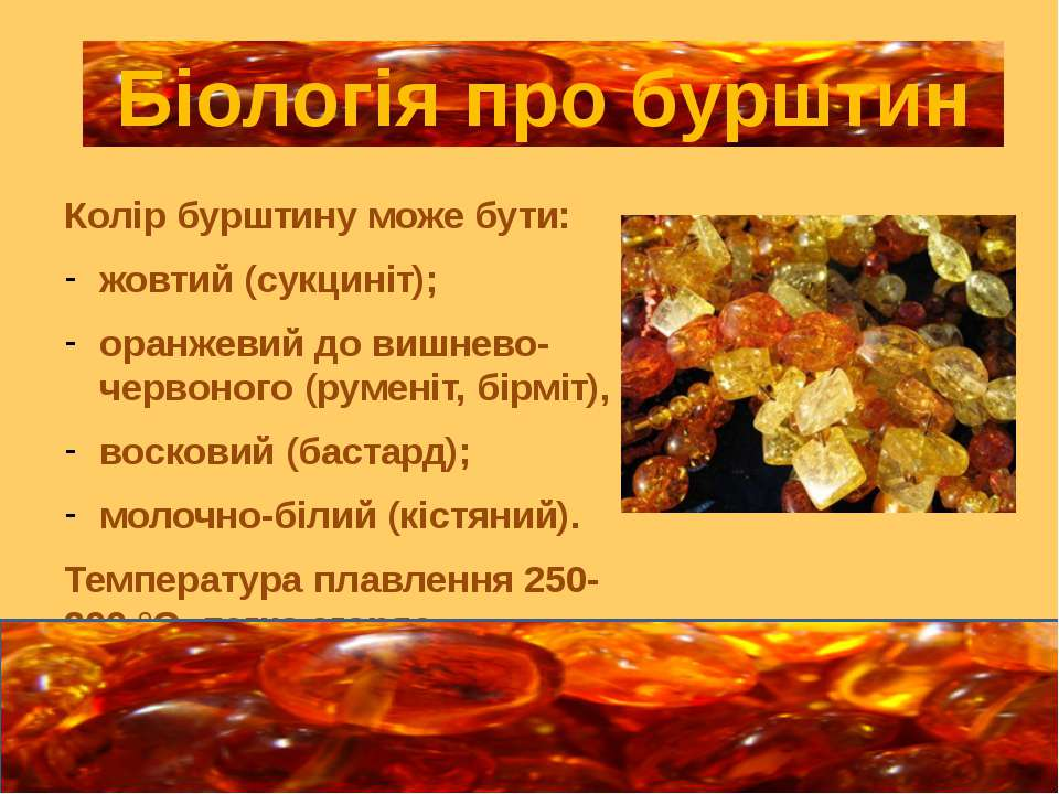 Колір бурштину може бути: жовтий (сукциніт); оранжевий до вишнево-червоного (...
