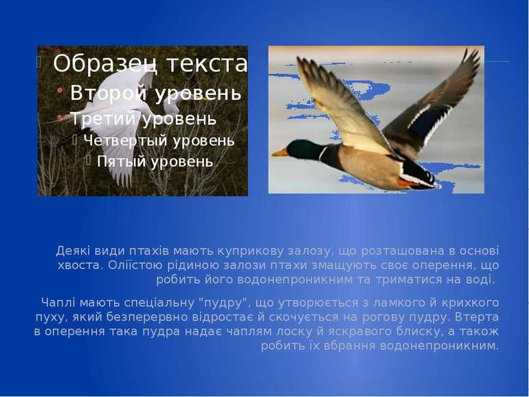 Деякі види птахів мають куприкову залозу, що розташована в основі хвоста. Олі...