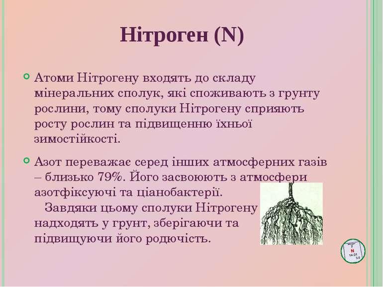 Атоми Нітрогену входять до складу мінеральних сполук, які споживають з грунту...