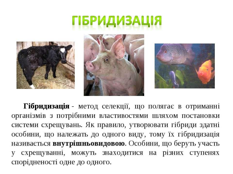 Гібридизація- метод селекції, що полягає в отриманні організмів з потрібними...