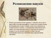 Павуки роздільностатеві тварини. У павуків також часто присутнійстатевий дим...