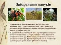 Павуки мають лише три види пігментів: візуальні пігменти,білін ігуанін, хоч...