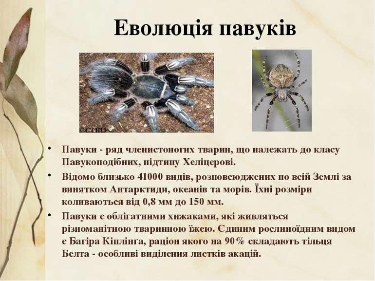 Павуки- рядчленистоногихтварин, що належать докласу Павукоподібних,підти...