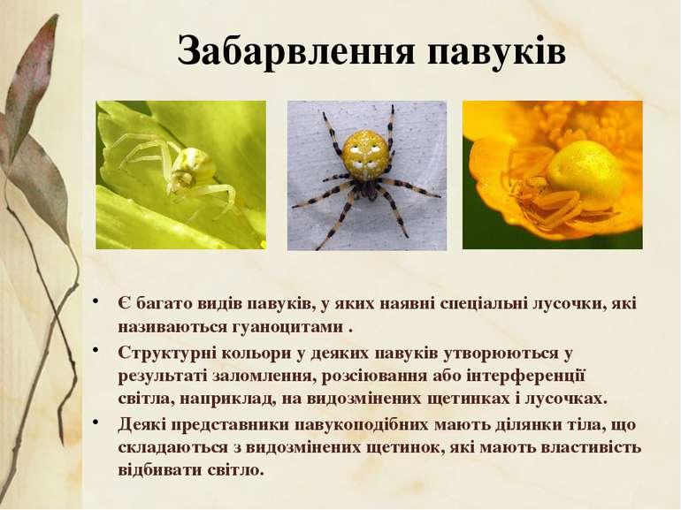 Є багато видів павуків, у яких наявні спеціальні лусочки, які називаються гуа...