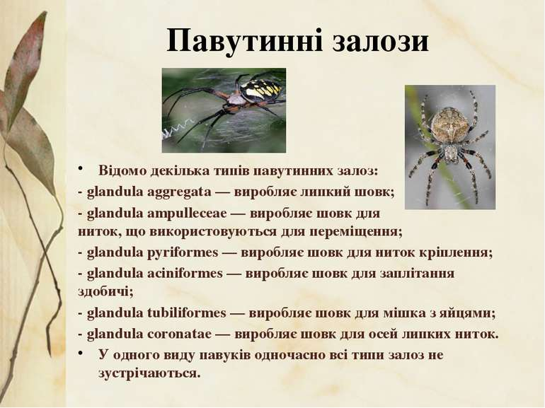 Відомо декілька типів павутинних залоз: - glandula aggregata— виробляє липки...