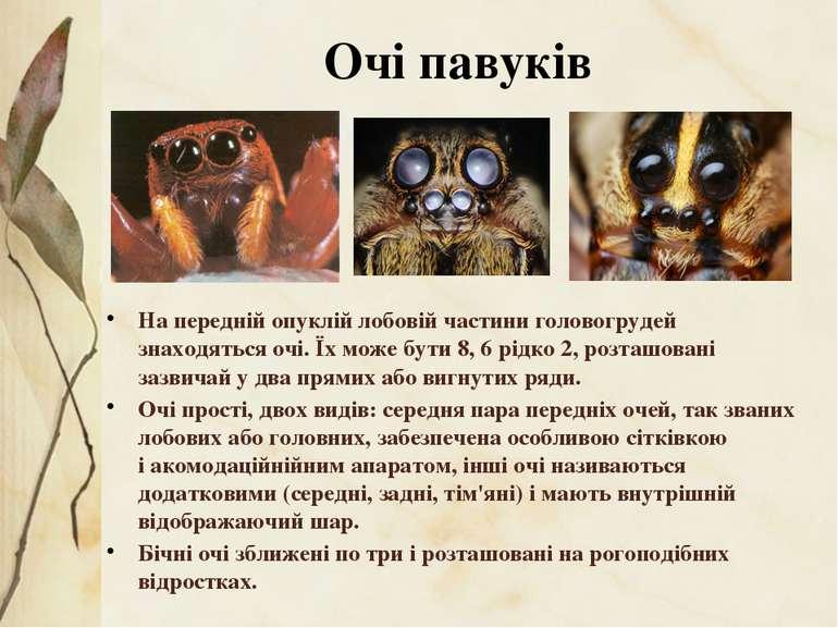 На передній опуклій лобовій частини головогрудей знаходяться очі. Їх може бут...