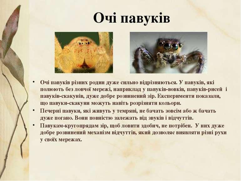 Очі павуків різних родин дуже сильно відрізняються. У павуків, які полюють бе...