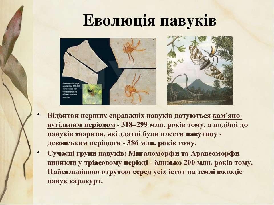 Відбитки перших справжніх павуків датуються кам'яно-вугільним періодом- 318–...