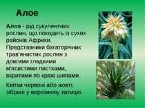 Алое Алое- рід сукулентних рослин, що походить із сухих районівАфрики. Пред...