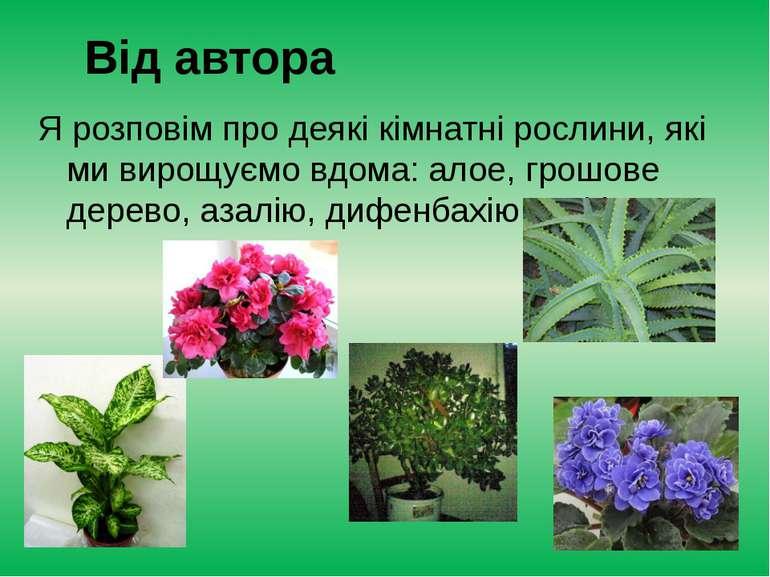 Я розповім про деякі кімнатні рослини, які ми вирощуємо вдома: алое, грошове ...