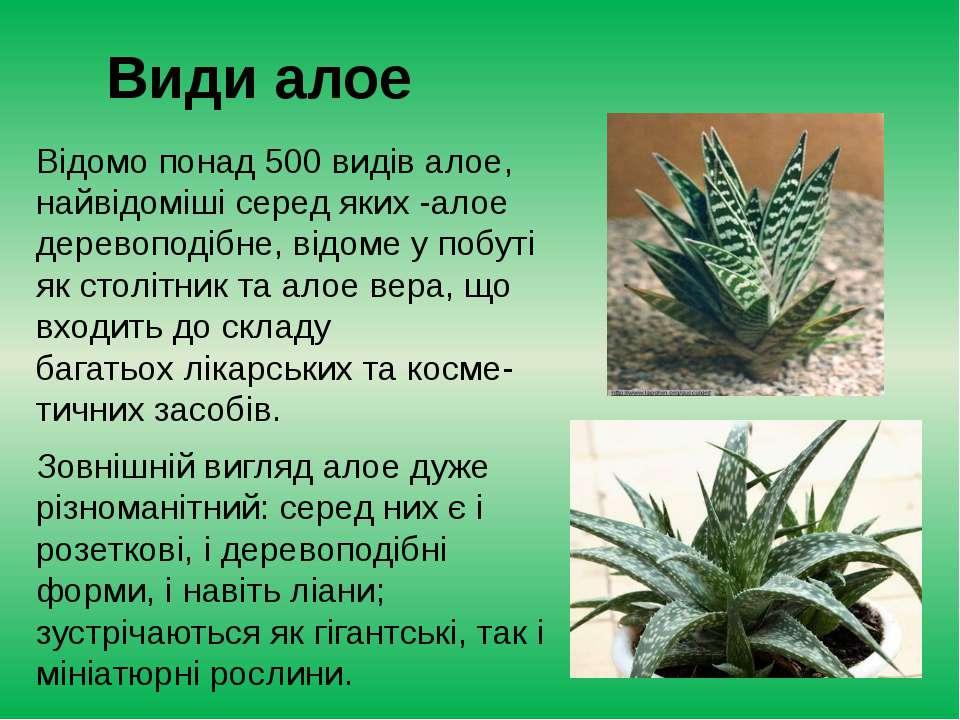 Види алое Відомо понад 500видів алое, найвідоміші серед яких-алое деревопод...