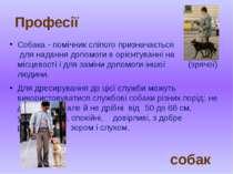 Собака - помічник сліпого призначається для надання допомоги в орієнтуванні н...