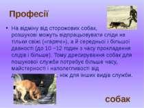 На відміну від сторожових собак, розшукові можуть відпрацьовувати сліди не ті...