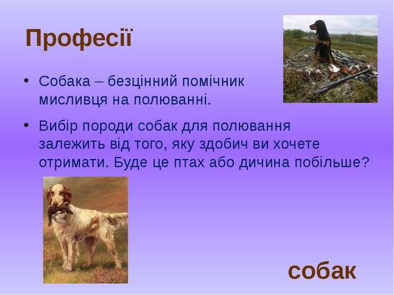 Собака – безцінний помічник мисливця на полюванні. Вибірпородисобакдля пол...
