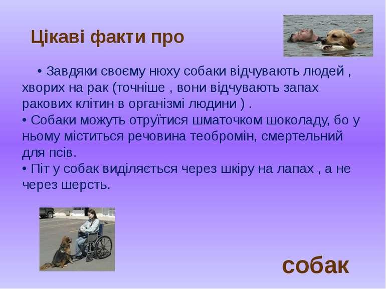• Завдяки своєму нюху собаки відчувають людей , хворих на рак (точніше , вони...