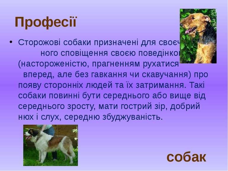 Сторожові собаки призначені для своєчас- ного сповіщення своєю поведінкою (на...