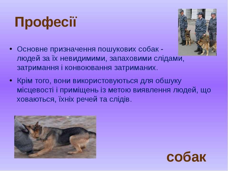 Основне призначення пошукових собак - розшук людей за їх невидимими, запахови...