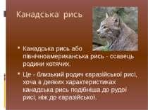 Канадська рись Канадська рись або північноамериканська рись - ссавець родини ...