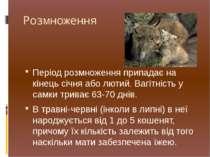 Розмноження Період розмноження припадає на кінець січня або лютий. Вагітність...