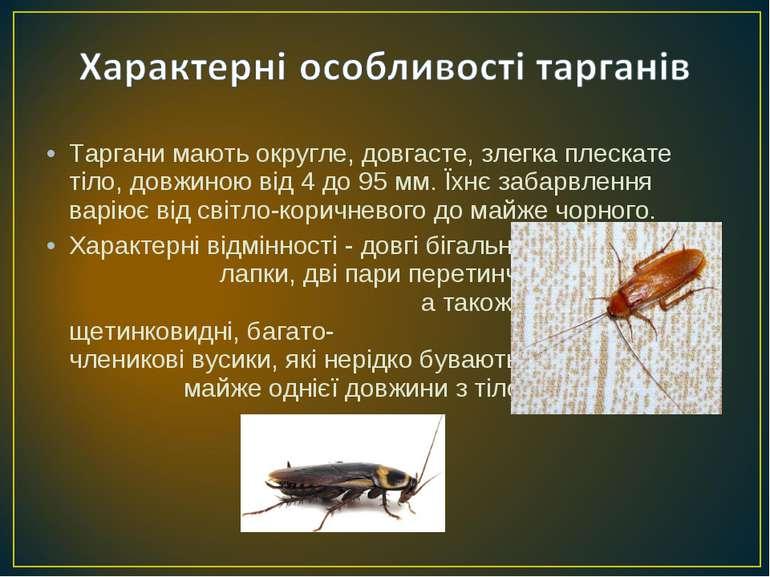 Таргани мають округле, довгасте, злегка плескате тіло, довжиною від 4 до 95м...