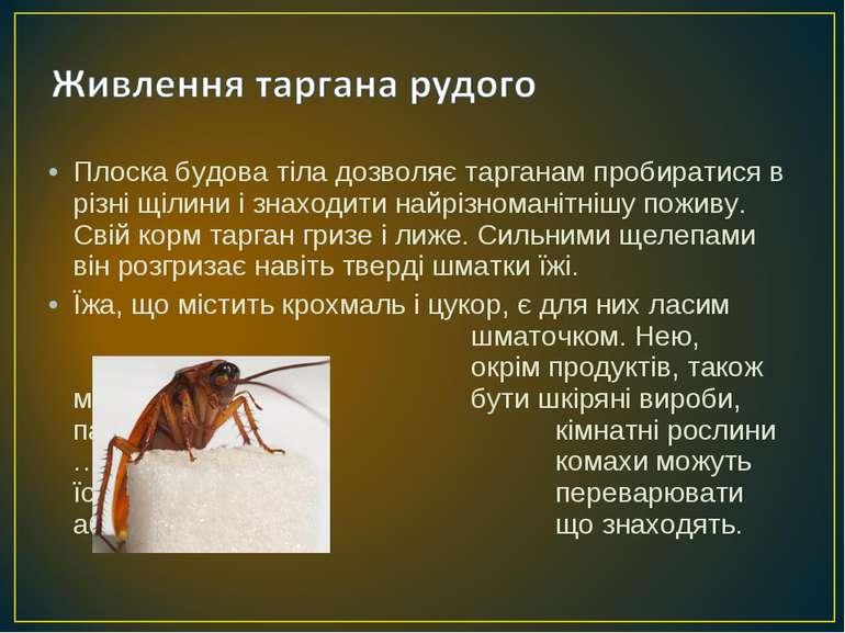 Плоска будова тіла дозволяє тарганам пробиратися в різні щілини і знаходити н...