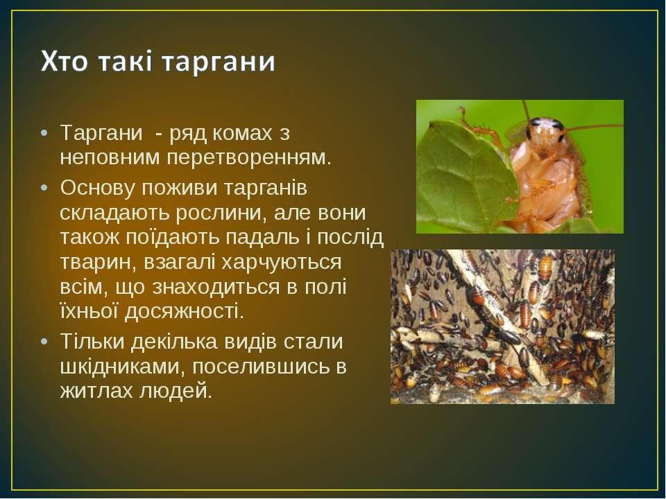 Таргани - ряд комах з неповним перетворенням. Основу поживи тарганів складают...