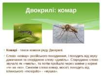 Комарі- такожкомахирядуДвокрилі. Слово «комар» російського походження, і ...