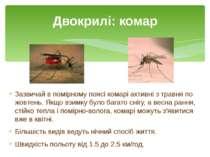 Зазвичай в помірному поясі комарі активні з травня по жовтень. Якщо взимку бу...