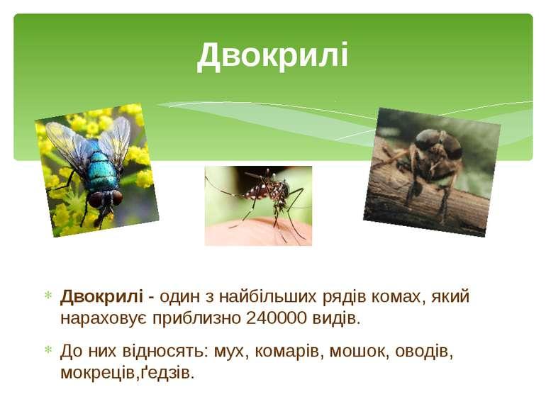 Двокрилі - один з найбільшихрядівкомах, який нараховує приблизно 240000вид...