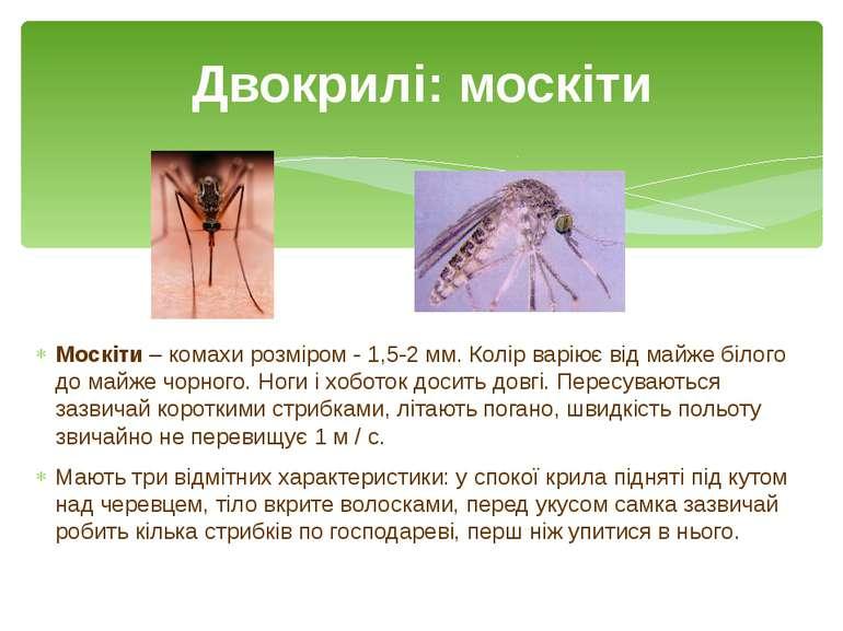 Москіти – комахи розміром - 1,5-2 мм. Колір варіює від майже білого до майже ...
