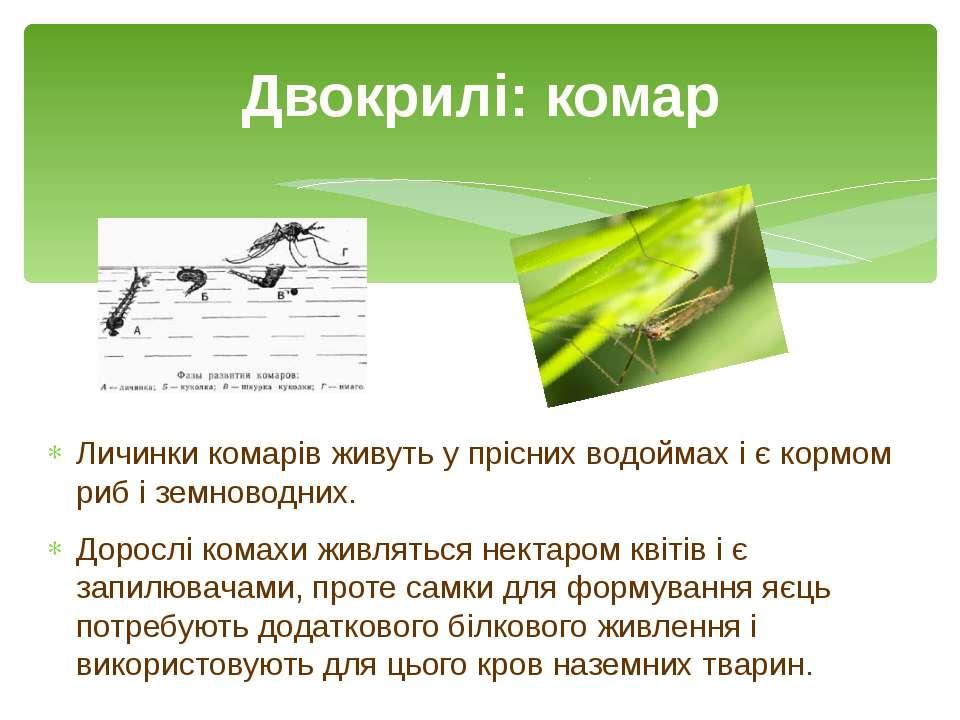 Личинки комарів живуть у прісних водоймах і є кормом риб і земноводних. Дорос...
