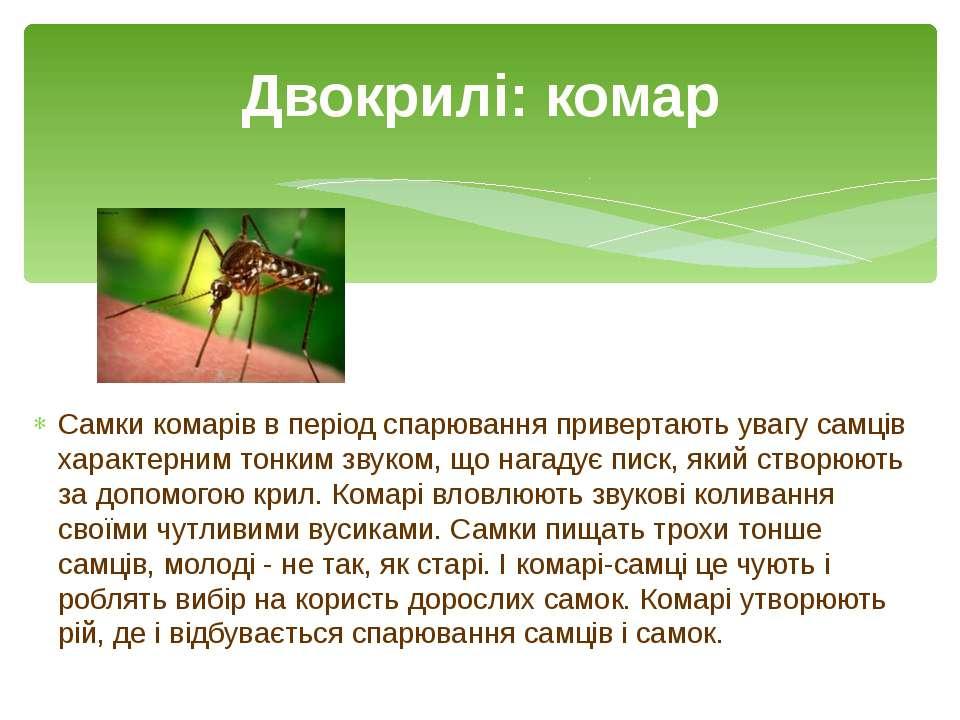 Самки комарів в період спарювання привертають увагу самців характерним тонким...