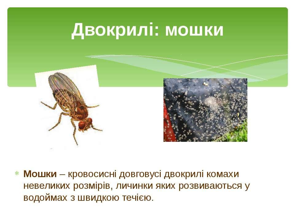 Мошки – кровосисні довговусі двокрилі комахи невеликих розмірів, личинки яких...