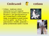 Собака - помічник сліпого призначається для надання допомоги сліпому в орієнт...