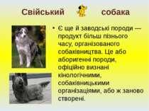 Є ще й заводські породи — продукт більш пізнього часу, організованого собаків...