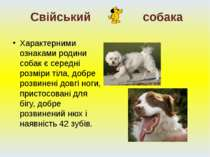 Характерними ознаками родини собак є середні розміри тіла, добре розвинені до...