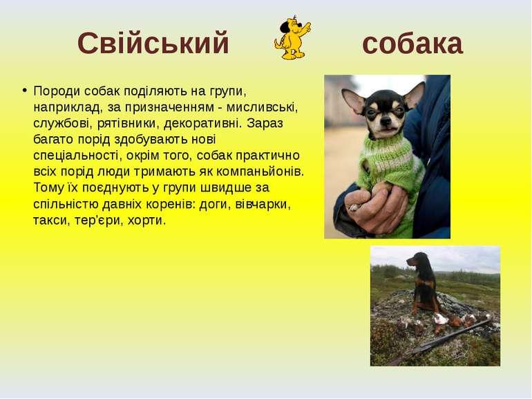 Породи собак поділяють на групи, наприклад, за призначенням - мисливські, слу...