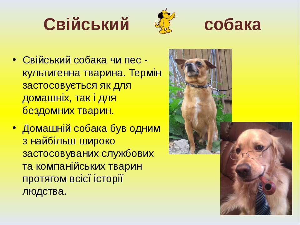 Свійський cобака чи пес - культигенна тварина. Термін застосовується як для д...