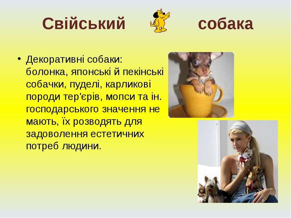 Декоративні собаки: болонка, японські й пекінські собачки, пуделі, карликові ...