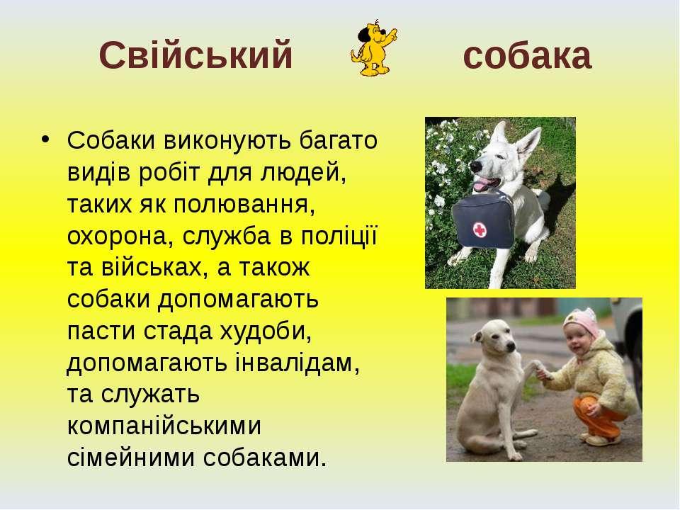 Собаки виконують багато видів робіт для людей, таких як полювання, охорона, с...