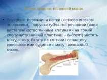 Внутрішні порожнини кістки (кістково-мозкові порожнини) і чарунки губчастої р...