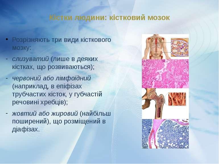Розрізняють три види кісткового мозку: слизуватий (лише в деяких кістках, що ...